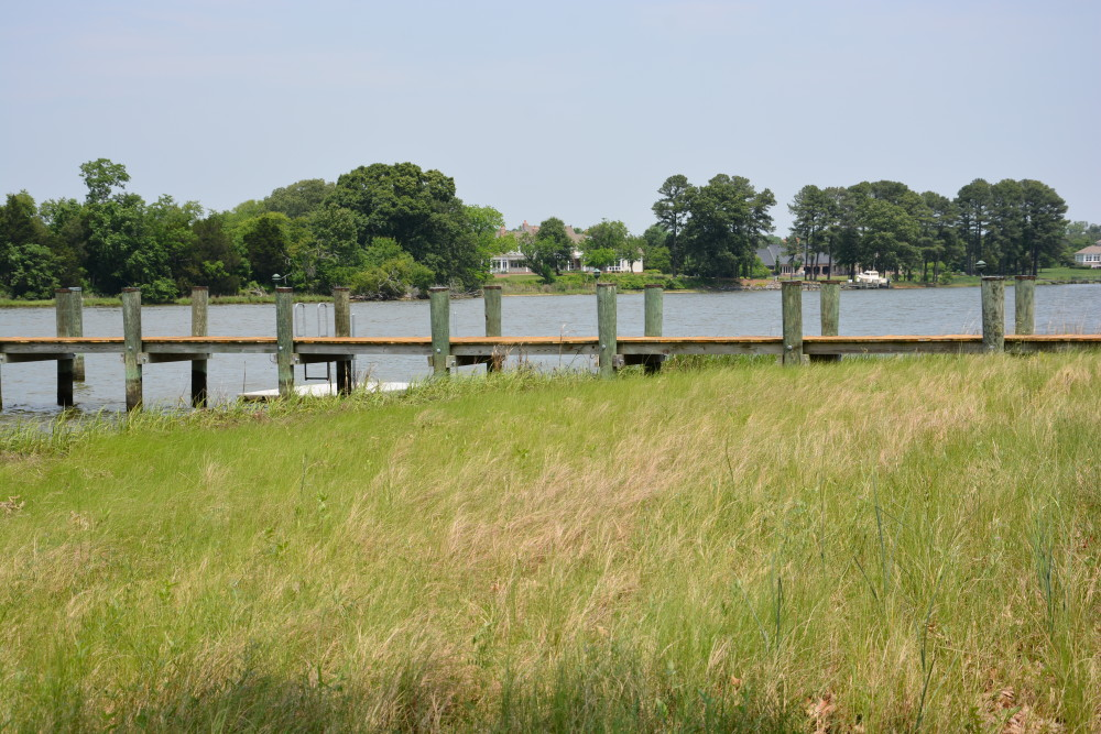 Living shoreline restoration with grasses and marshlands