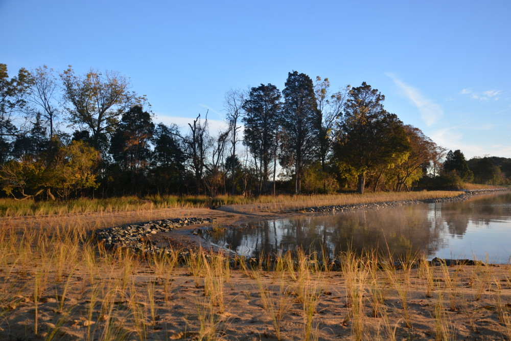 Tred Avon – created living shoreline for shoreline erosion control